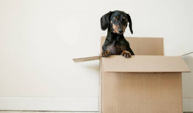 Tips for Moving Home
